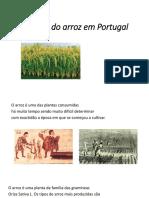 História Do Arroz Em Portugal