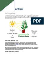 Photosynthesis 1