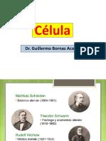 Celula Eucariote