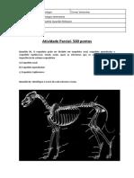Avaliação Radiologia Vet