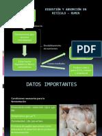 DIGESTIÓN Y ABSORCIÓN EN RETÍCULO - RUMEN actu.pptx