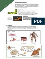 ficha-Clasificación de los seres vivos.docx