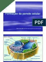 Aula 2 Formação da parede celular