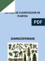 Diversidad Vegetal Clase 2