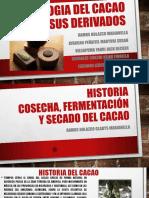 Cacao Historia