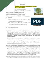 INFORME 3 dedrologia