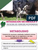 2017 Integración Metabólica II BEL 2017