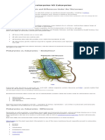 Prokaryotes vs Eukaryotes