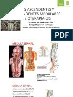 Vias Ascendentes y Descendentes Medulares-fisiot-uis-Vst
