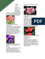 50 Tipos de Flores