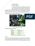 DESCRIPCION DE EUCALIPTO.docx