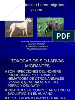 Clase de Toxocariosis 2
