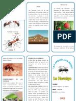 triptico la hormiga