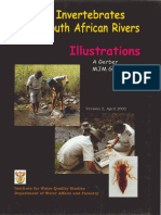 Aquatic Invertebrates of South African Rivers