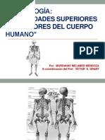 Cuerpo humano( extremidades superiores y inferiores)