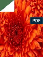 Chrysanthemum.pdf