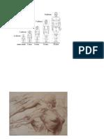 Anatomia Aera