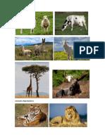 Animales Rumiantes Depredadores