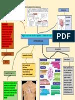 Mapa Mental Electrocardiograma