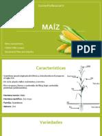 maíz.pptx