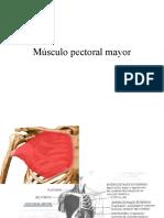 Músculo pectoral mayor y psoas iliaco
