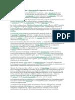 Proceso de las Descripciones de Puestos.docx