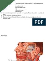 Estudo Dirigido - Sistema Digestório