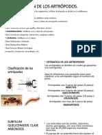 Clasificación de Los Artrópodos