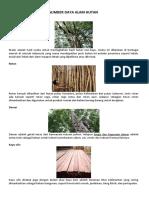 Sumber Daya Alam Dari Hutan