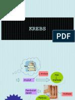 KREBS-1