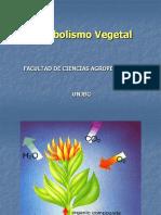 FOTOSINTESIS (1).ppt