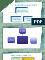 Farmacoterapia Diseño de Diapositivas