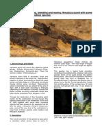 Breeding Hynobius Dunni.pdf