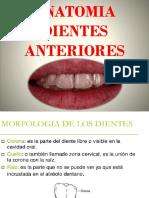 Anatomia Dientes Anterioress