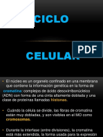 Ciclo Celular (facultad de ciencias médicas)
