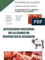 Bovinos y Porcinos B1