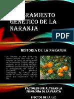 Mejoramiento Genético de La Naranja