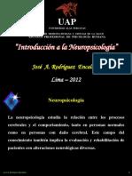Introducción a la Neuropsicología.ppt