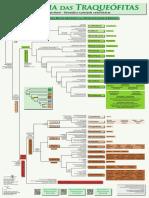 Filogenia Das Traqueófitas - Pôster [Cole Et Al. 2018]