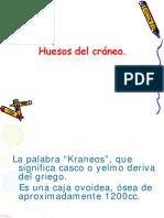 Huesos Del Craneo Generalidades