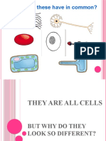 Special is Ed Cells[1]