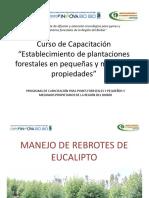 II.4-Manejo-retoños.pdf
