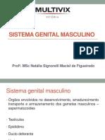 201942_8524_Reprodutor+masculino (7)