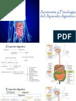 34682_1000139751_06-12-2019_101929_am_Anatomía_y_Fisiología_del_Aparato_digestivo_2019