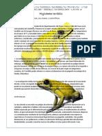Ensayó, Phyllobates Terribilis, Dendrobates Truncates. Javier Sanjuan Mercado,Biologia de Cordados, Grupo, 19
