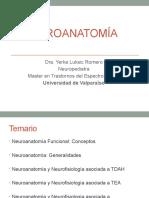 Clase neuroanatomia diplomado.pptx