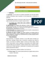 U2 ANATOMIA.pdf