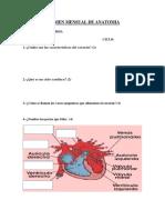 Examen de Anatomia 2