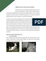 Caracteristicas de La Raza de Los Conejos Carne - Pelo y Productores de Piel
