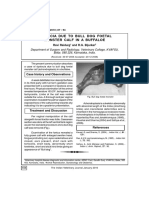 Dystocia due to bull dog foetal monster calf in a buffaloe.pdf